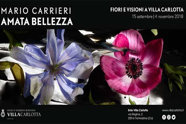Mario Carrieri - Amata Bellezza